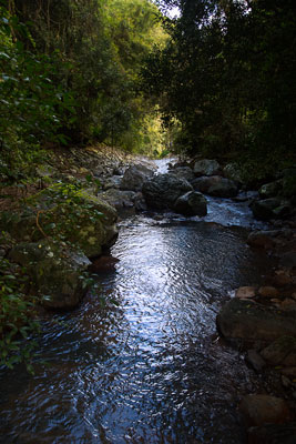 Thumbnail image ofCave Creek running through the rainforest.