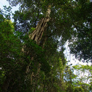 Trees and vines climb upwards from the rainforest floor to reach the light.