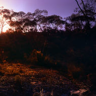 Sunset and red haze in the Australian goldfields.