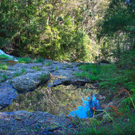 Little Nerang Creek about to plunge over Purling Brook falls.