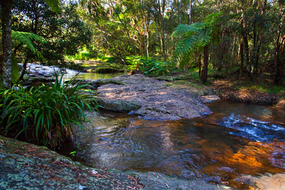 Thumbnail image of Little Nerang Creek upstream of the Purling Brook...