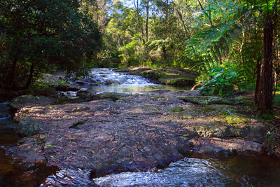 Thumbnail image ofLittle Nerang Creek upstream of the Purling Brook...