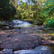 Little Nerang Creek upstream of the Purling Brook falls.
