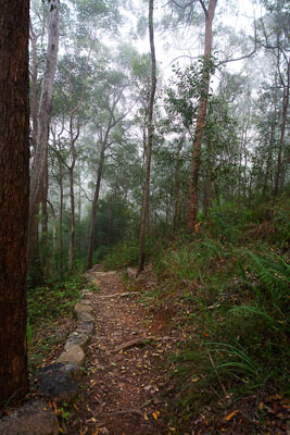 Thumbnail image of Forest walking track through the low cloud early...