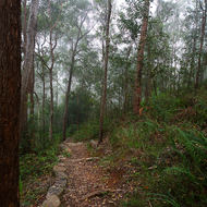 Forest walking track through the low cloud early in the morning.