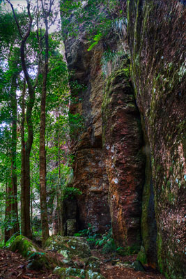 Thumbnail image ofSteep sides of the canyon and the lower rainforest...