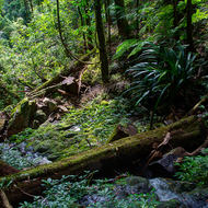 Running stream, fallen rocks and the rainforest in the canyon.