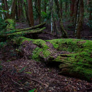 Fallen trees and moss in the relatively dry upper rainforest.