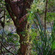A small tree hosts smaller plants in the rainforest.