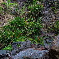 Grasses, mosses and small ferns loving the wet conditions behind Twin Falls.