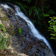 Boy-ull Creek cascades into the rainforest below Twin Falls.