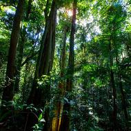 The sun peeks through the rainforest canopy.