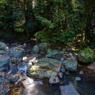 Cave Creek makes its way quietly through the rainforest.