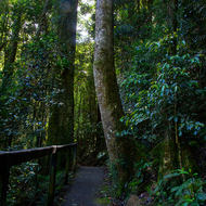 Rainforest track.