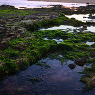 Seaweed and tidal pools.
