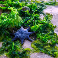 Green and blue: seaweed and star fish.