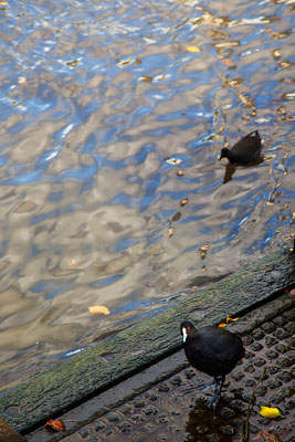 Thumbnail image ofInquisitive bird on the Yarra River bank.
