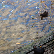 Inquisitive bird on the Yarra River bank.