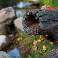 Hollow log provides a nice home for something at the Southside Sustainability Centre.