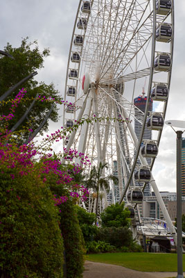 Thumbnail image of The wheel of Brisbane.