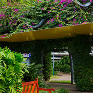 Stop here and enjoy the view of the bougainvillea walk.