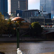 One legged seagull and maybe a no legged seagull looking out over the Yarra River from Southbank.