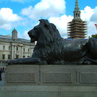 One of the lions in Trafalgar Square in front of the National Gallery.