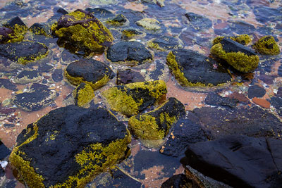 Thumbnail image of Tidal pools with rocks and algae.
