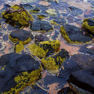 Tidal pools with rocks and algae.