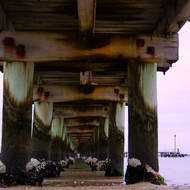 Underneath Port Melbourne pier, early morning low tide.