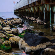 Rocks, algae and calm water; Port Melbourne pier, early morning low tide.