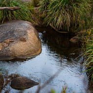 The Coomba waterhole forms a patch of light between the granites and grasses.
