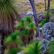 Dry grasses, granite tors and verdant grass trees, xanthorroea.