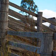 Old cattle loading ramp.