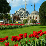 Tulip display near the Sultan Ahmet Mosque, the Blue mosque.
