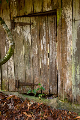 Thumbnail image ofFarm shed door, big enough for a cow to pass through...