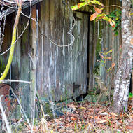 Abandoned and collapsing farm shed.