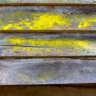 Colors of fungus and textures in the timbers of and old farm shed.