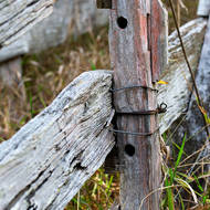 Textures and colors of an old fence.