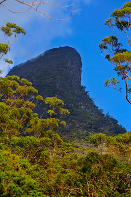 Thumbnail image of Mount Warning, 1135 metres above sea level, stands...
