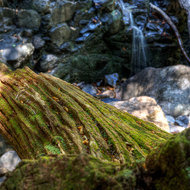 Old weathered tree roots in the boulder debris field of Bat Cave Creek at the foot of Protesters Falls waterfall.