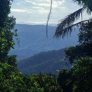 View east from the side of Mount Warning towards the Pacific Ocean and the town of Byron Bay.
