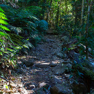 The foot track to the summit of Mount Warning, not easy walking.