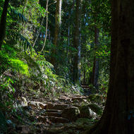 The foot track to the summit of Mount Warning, goes up, then up, then up further.