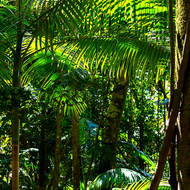 Light, shade and patters under palms in the rainforest.