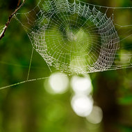 Spider web capturing the morning mist and highlighted by the low sun.