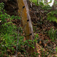 Old fence post and fallen barbed wire.