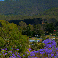 Panorama covers the entire village of Rathdowney, Jacaranda trees in the foreground.