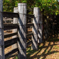 Sturdy fence of a cattle loading race.
