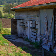 Abandoned farm shed and cows in pasture.